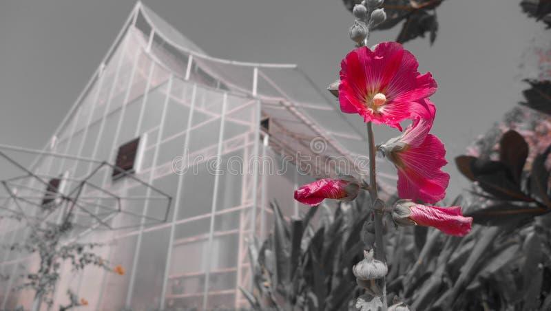 Flor foto de archivo