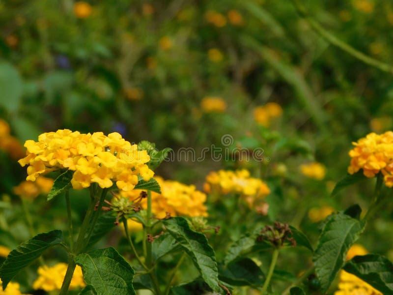 Flor 3 imagem de stock royalty free