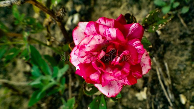 Flor foto de stock royalty free