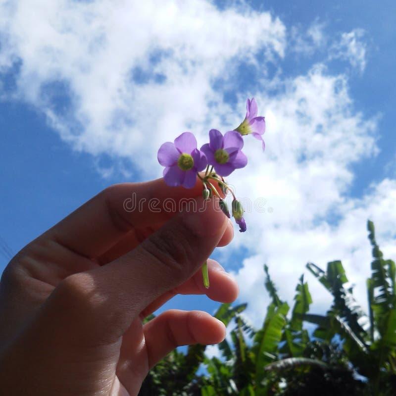 flor arkivfoton
