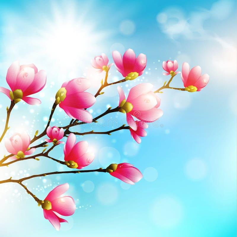 Flor abloom cor-de-rosa da magnólia ilustração royalty free