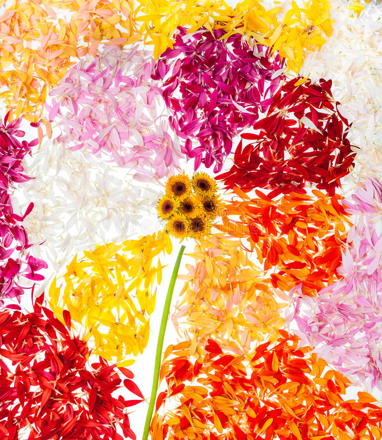Flor abstracta con los pétalos alrededor fotografía de archivo libre de regalías