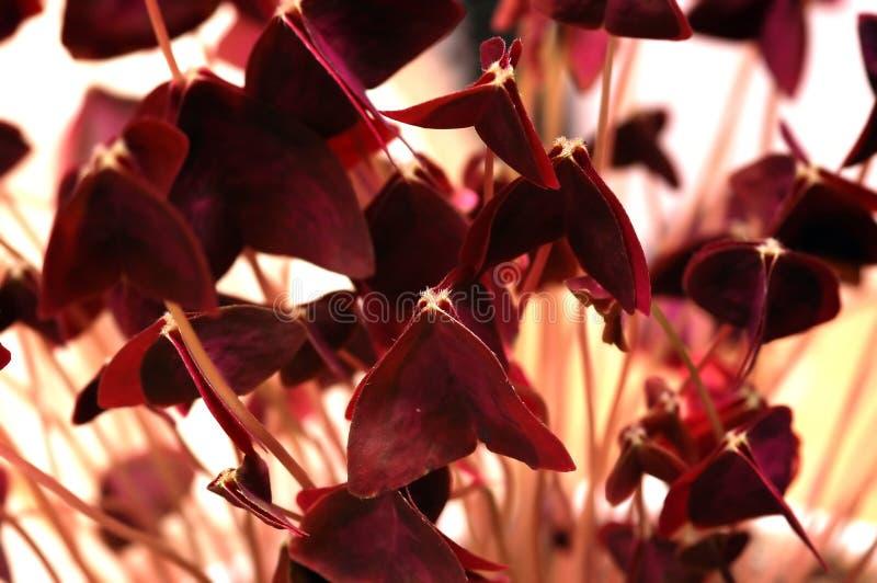 Flor abstrata fotos de stock