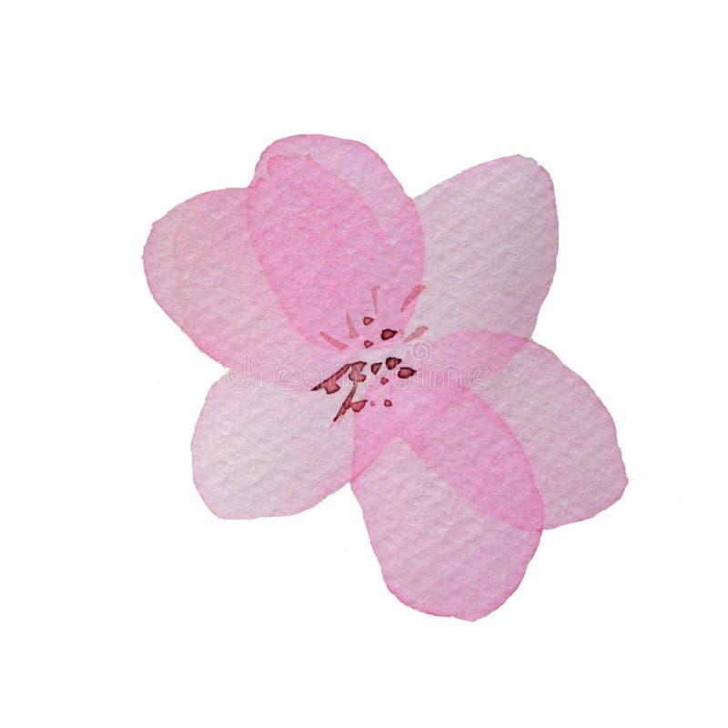 Flor acodada transparente del rosa de la acuarela stock de ilustración