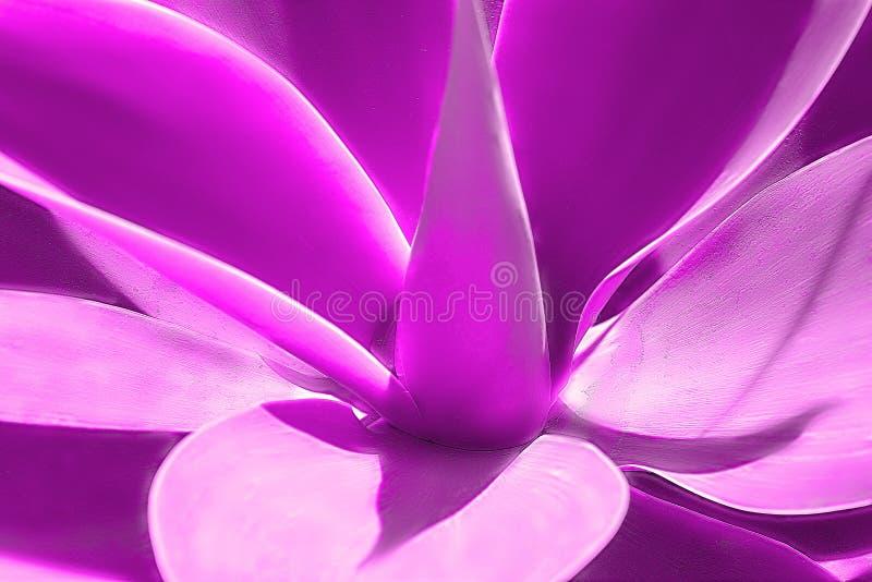 Flor africana bonita de Purpule em um dia ensolarado fotos de stock
