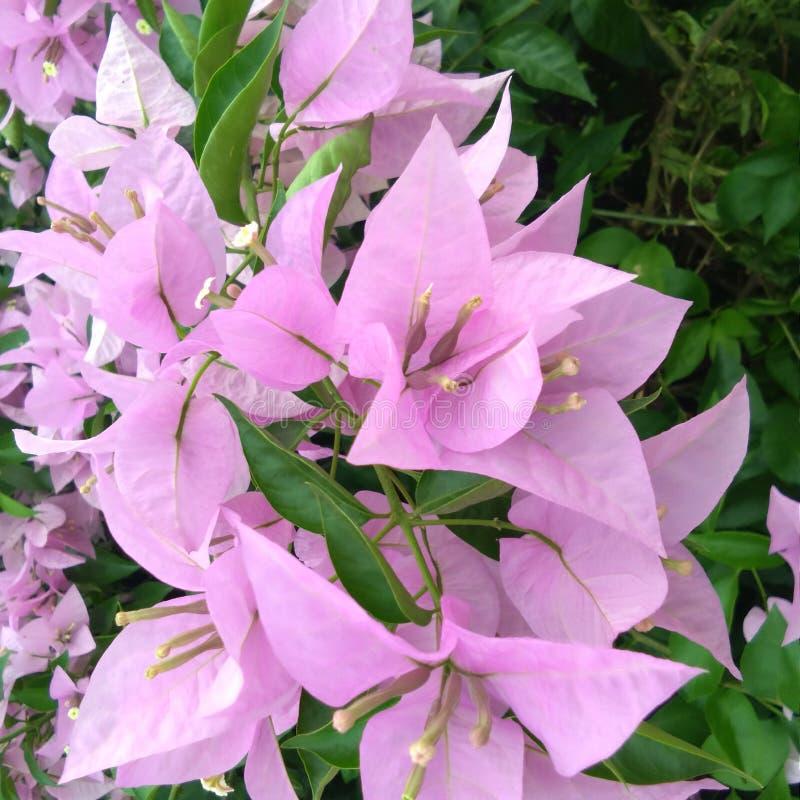 Flor agradável no jardim foto de stock