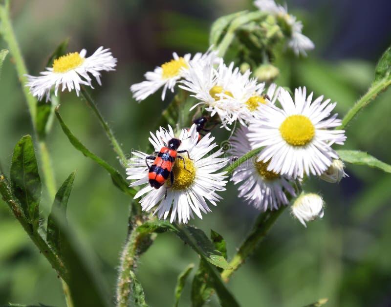 Flor agradable imagen de archivo