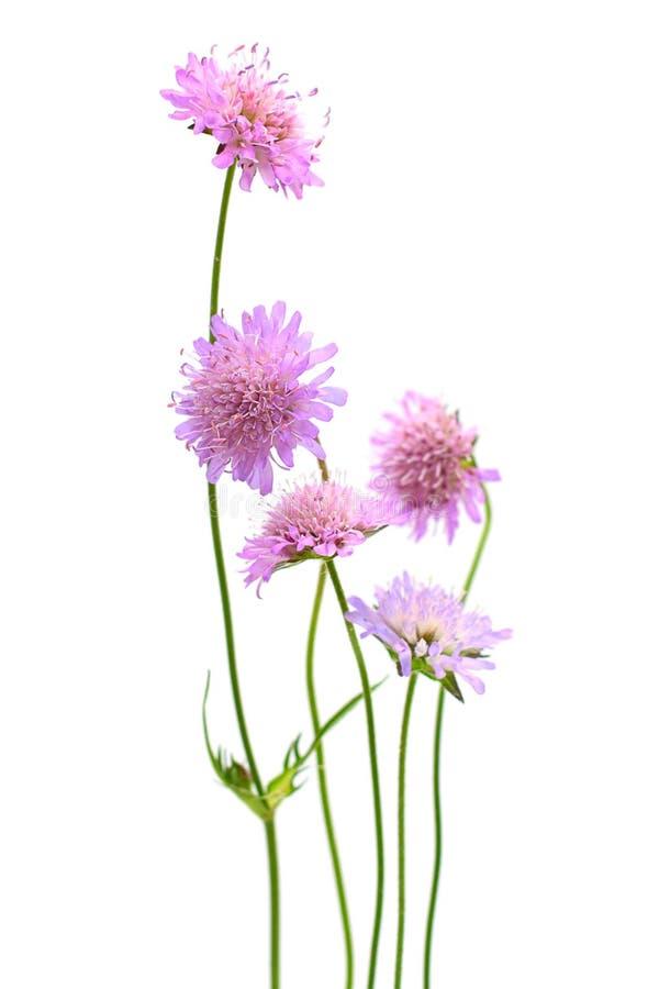Flor aislada foto de archivo