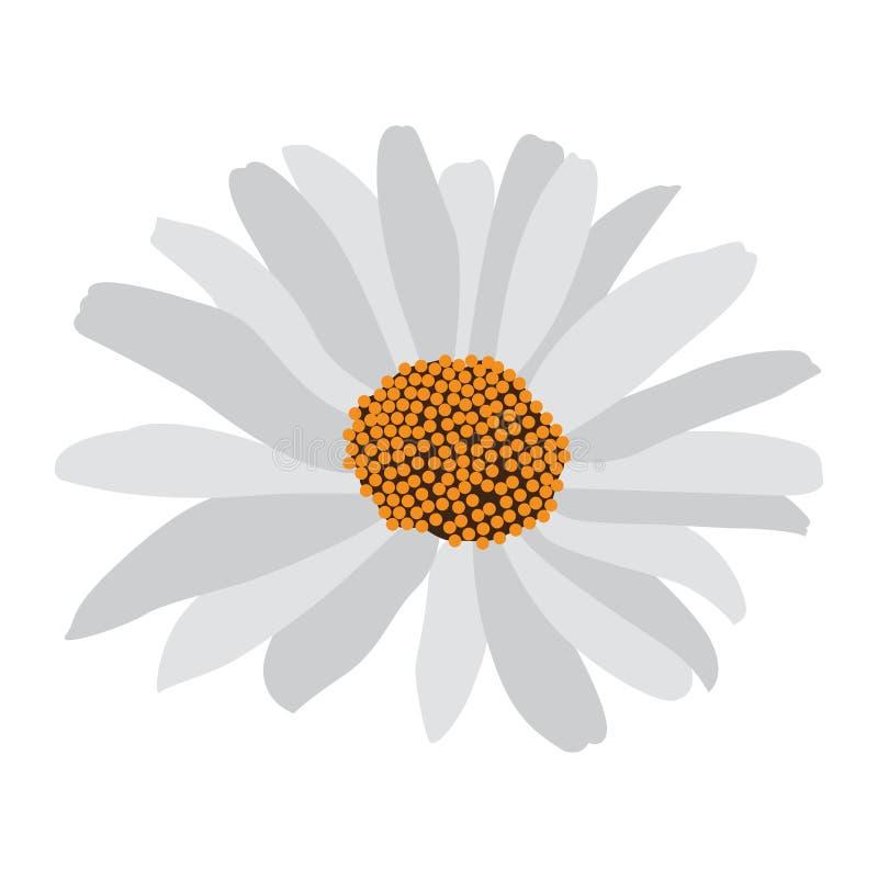 Flor aislada de la margarita ilustración del vector