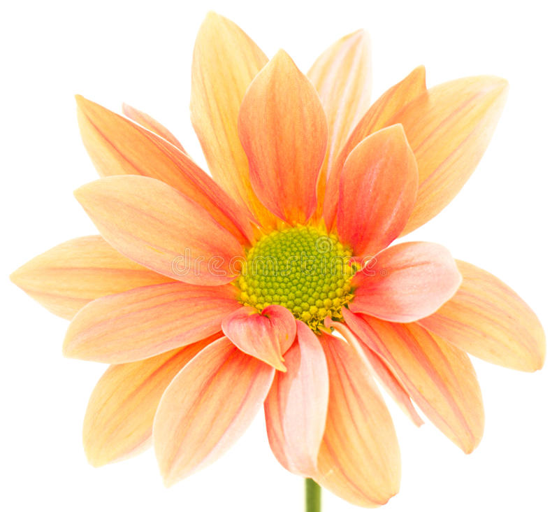 Flor alaranjada imagem de stock royalty free