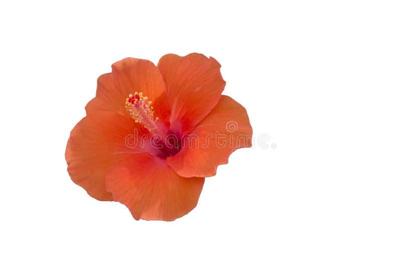 Flor alaranjada fotos de stock