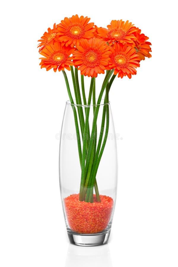 Flor alaranjada do gerbera foto de stock royalty free