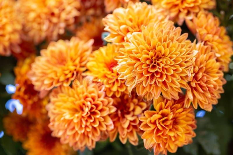 Flor alaranjada e folha verde no jardim no dia ensolarado do ver?o ou de mola para a decora??o da beleza do cart?o e o projeto da fotografia de stock