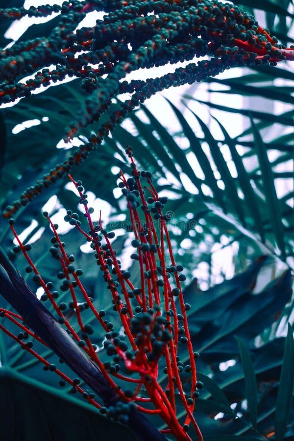 Flor alaranjada e verde do ramo foto de stock