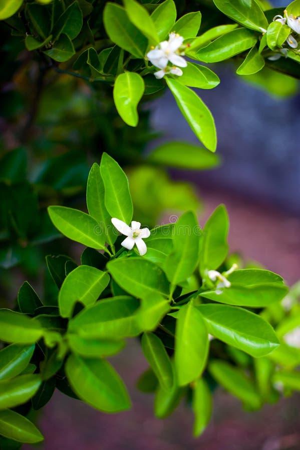 Flor alaranjada sobre o fundo da folha da natureza, flores bonitas de imagem de stock royalty free