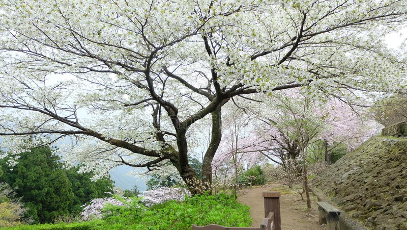 Flor alegre en la capillade KumanoNachi-taishafoto de archivo
