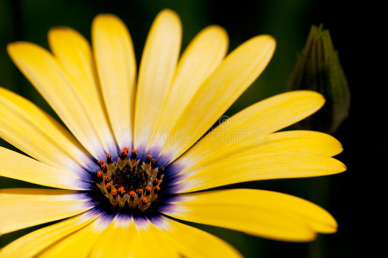 Flor amarela fotos de stock