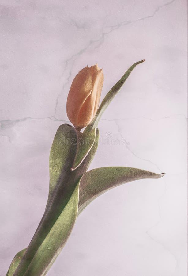 A flor amarela fotos de stock royalty free
