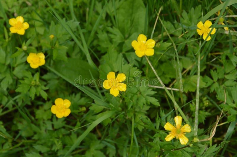 A flor amarela imagens de stock