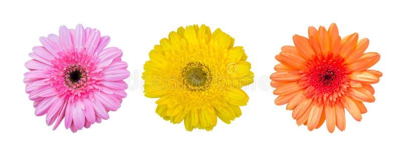 Flor amarela, alaranjada e cor-de-rosa do gerbera, vista superior, no fundo branco foto de stock royalty free