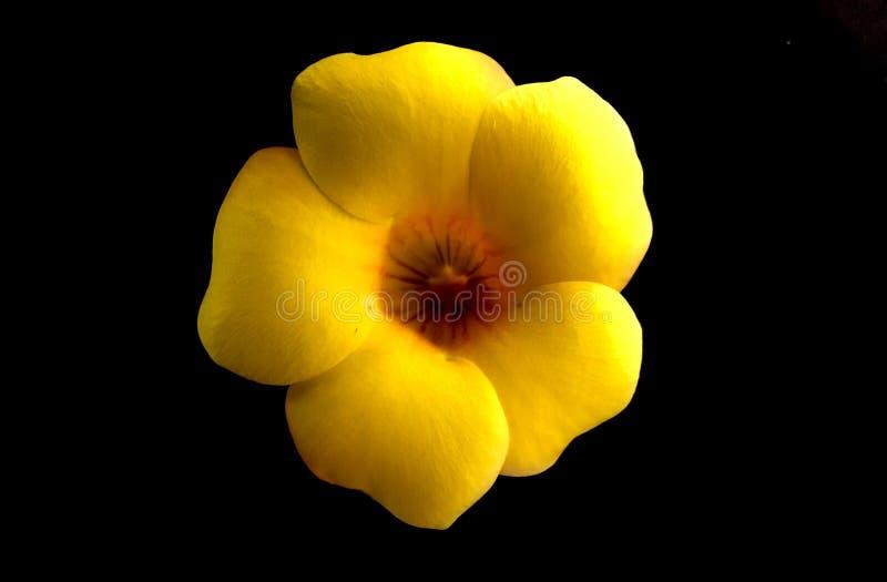 Flor amarela bonita imagens de stock
