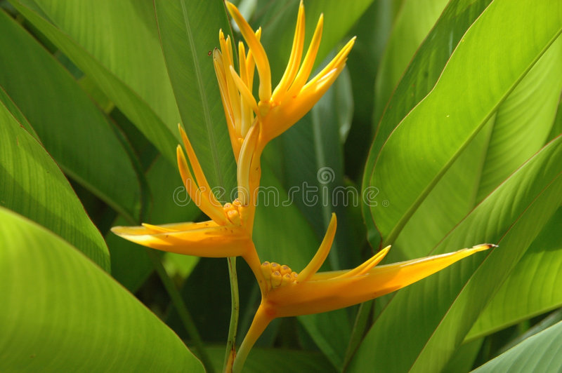 Flor amarela colorida fotos de stock royalty free