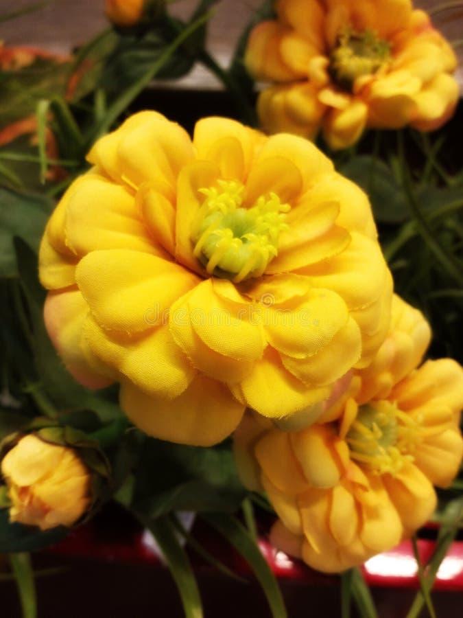 Flor amarela colorida foto de stock royalty free