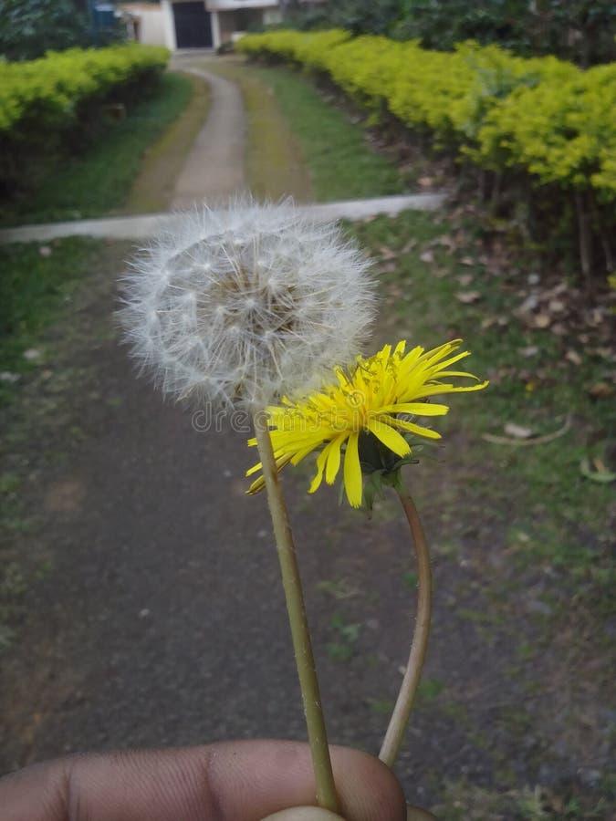Flor amarela com bola imagens de stock royalty free