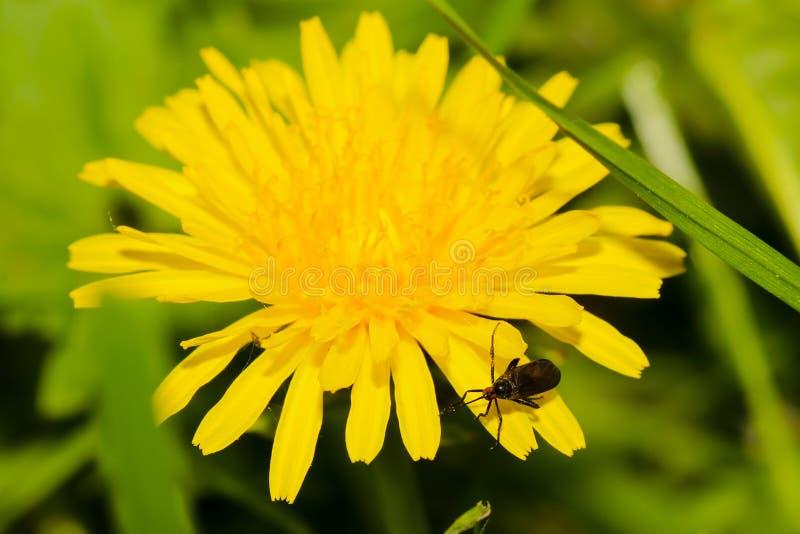 Flor amarela com fim do erro acima foto de stock royalty free