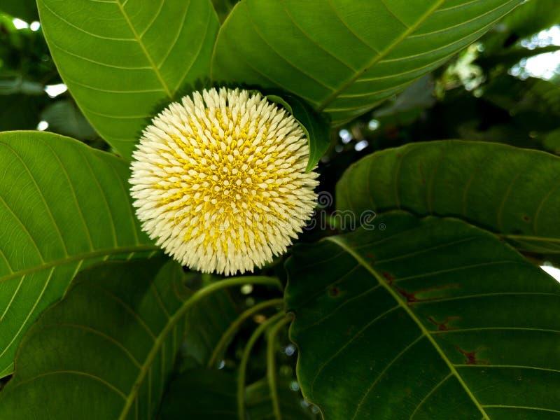 Flor amarela com licença imagens de stock