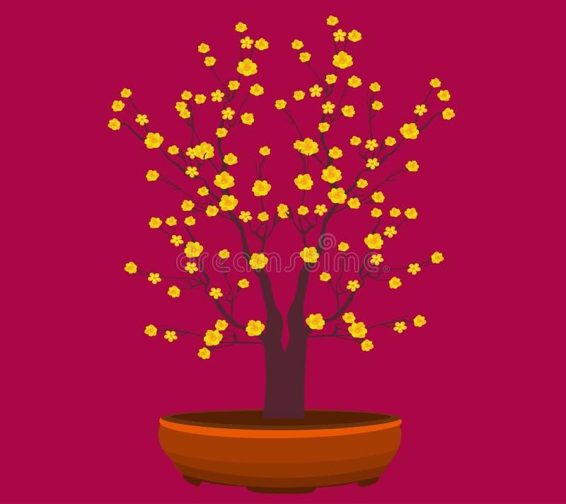 Flor amarela do abricó, ano novo lunar tradicional em Vietname ilustração royalty free