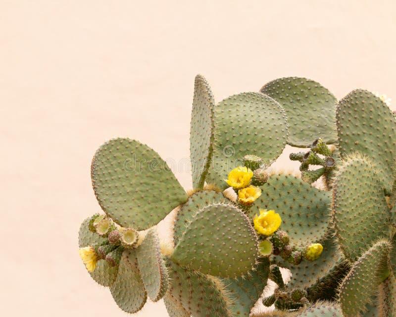 Flor amarela do cacto fotografia de stock