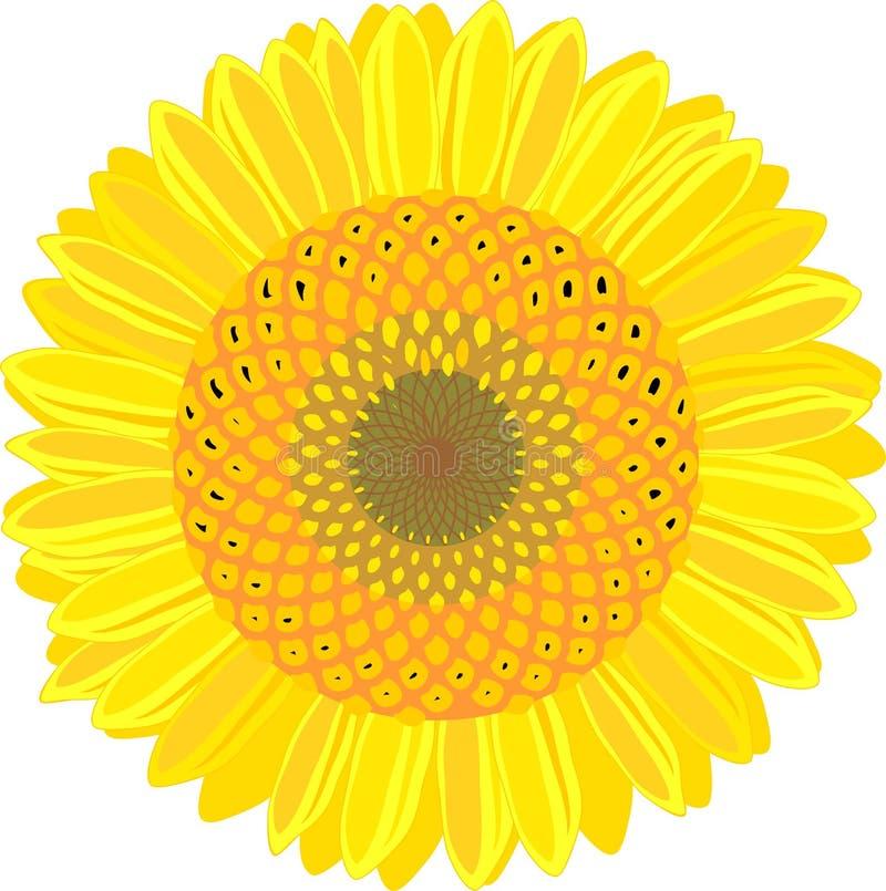 Flor amarela do girassol no fundo branco ilustração royalty free