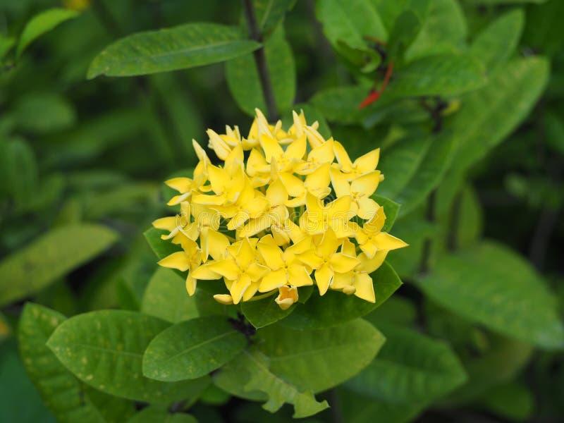 Flor amarela do ponto imagem de stock