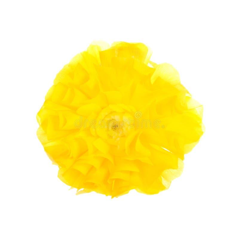 Flor amarela do ranúnculo isolada no branco fotos de stock
