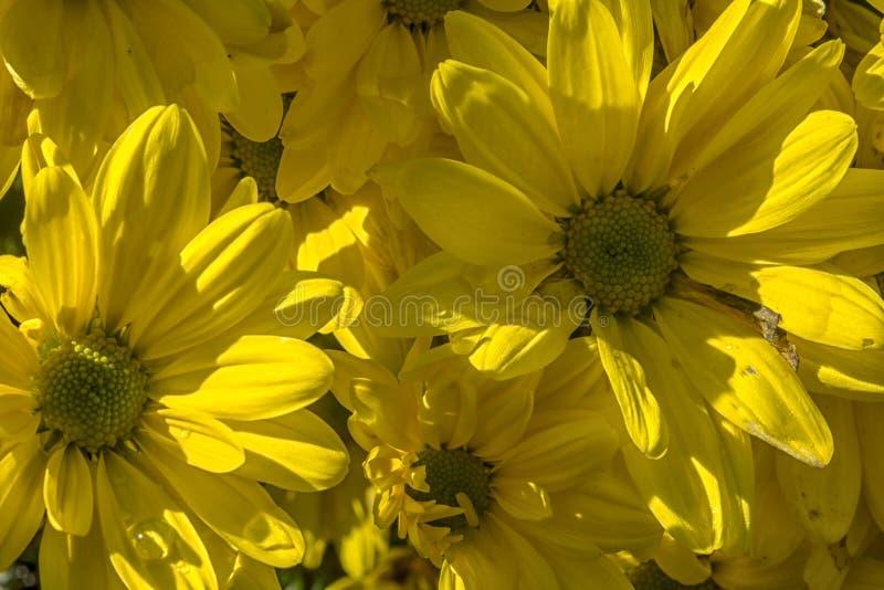 A flor amarela do sumário imagem de stock royalty free
