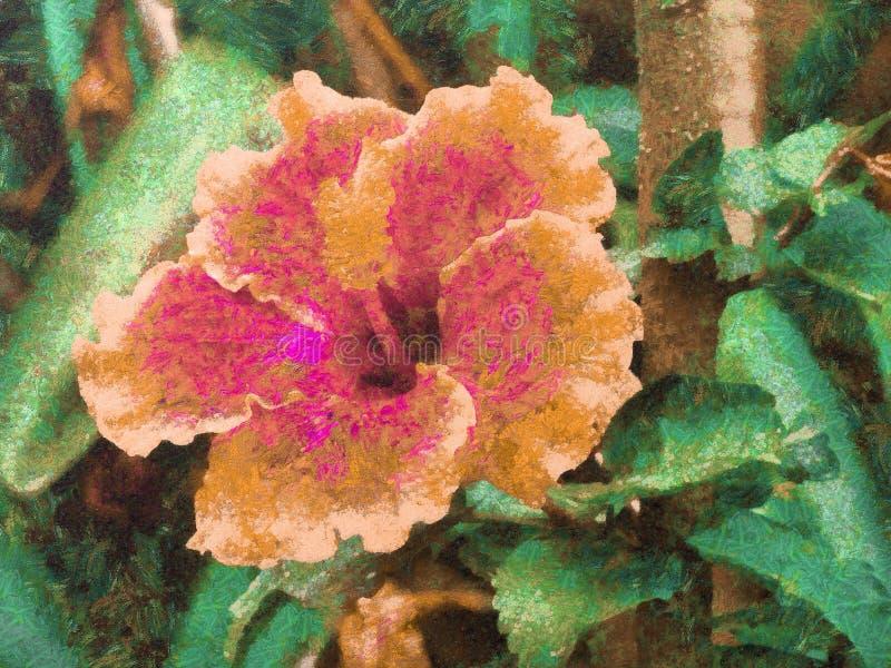 Flor amarela e cor-de-rosa da malva rosa em um jardim ilustração royalty free