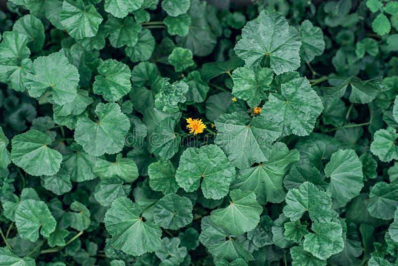 Flor amarela em um conceito no meio das flores verdes Paisagem do verão na cidade A ideia é uma contra tudo fotografia de stock royalty free