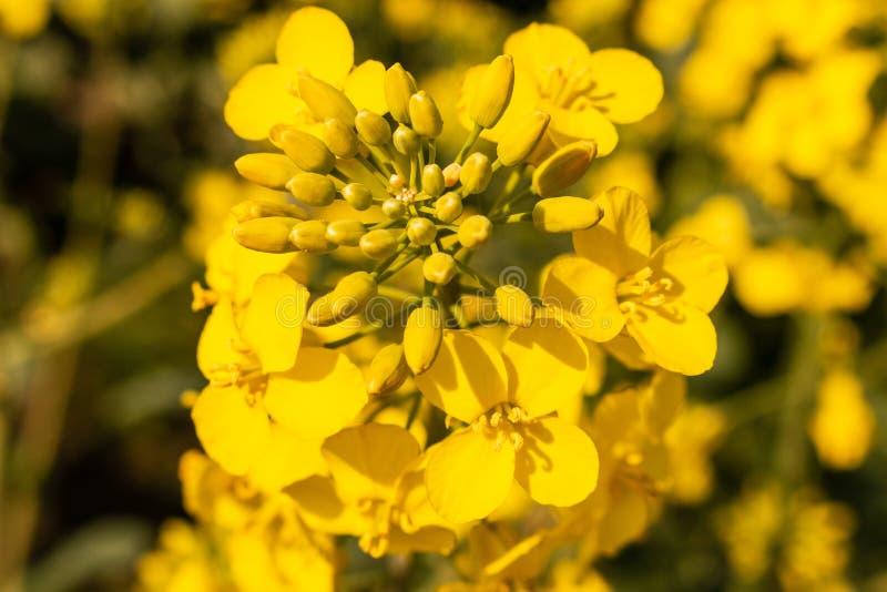 Flor amarela no prado fotografia de stock