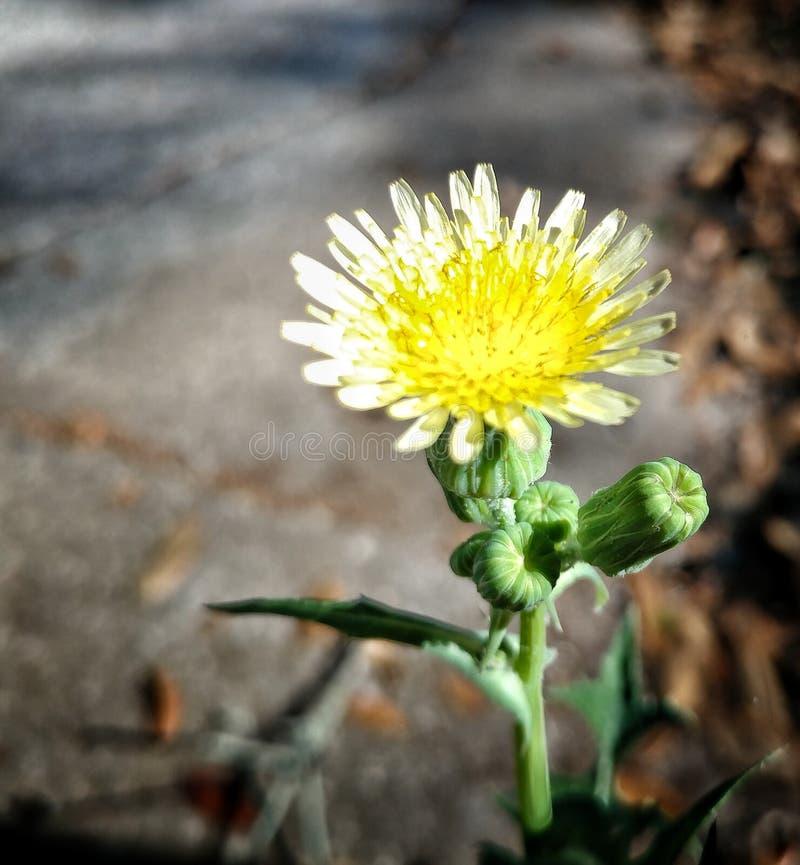 Flor amarela pequena imagem de stock