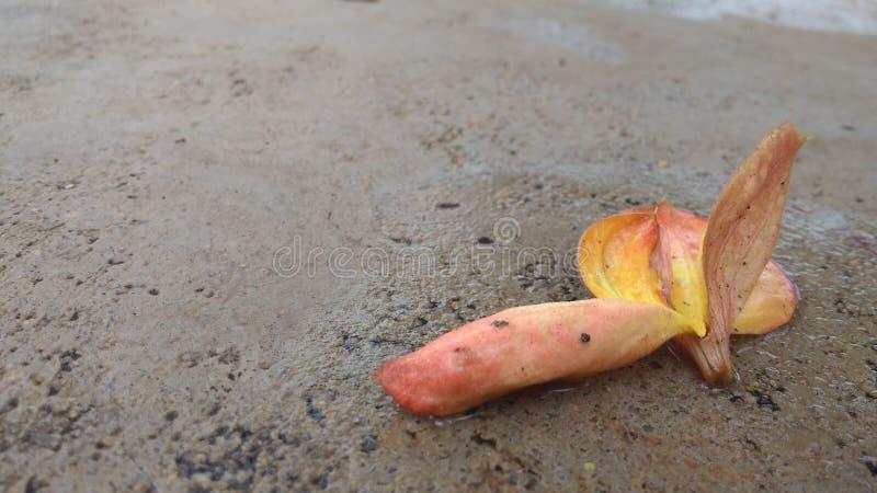 Flor amarelada de Orangey foto de stock royalty free