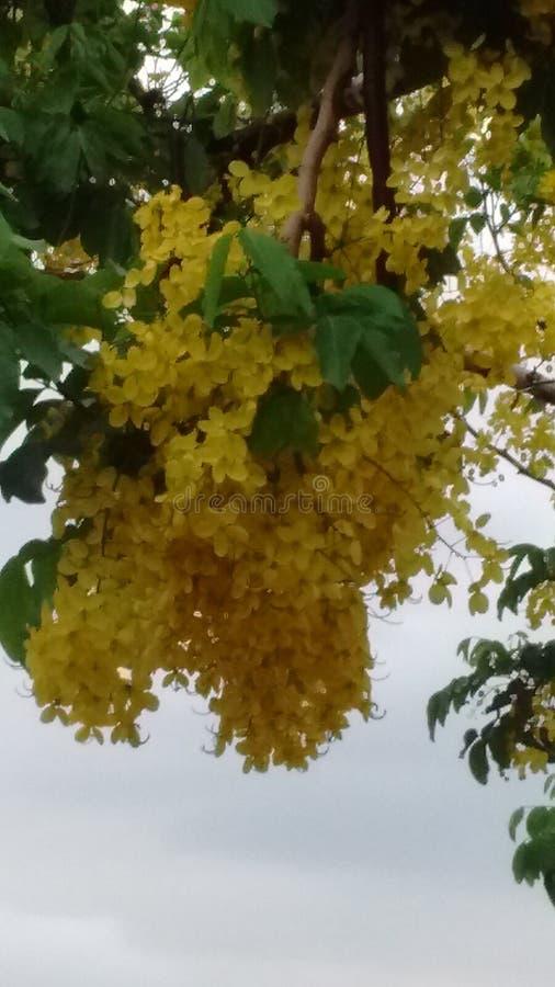 Flor amarelas fotografia stock