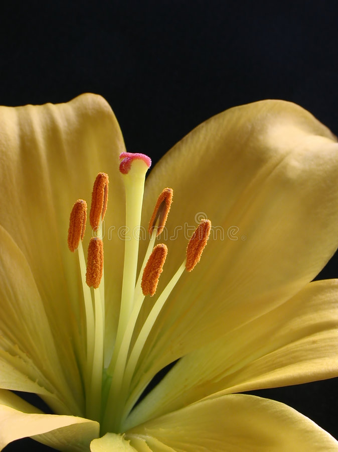 Flor Amarilla Imagenes de archivo