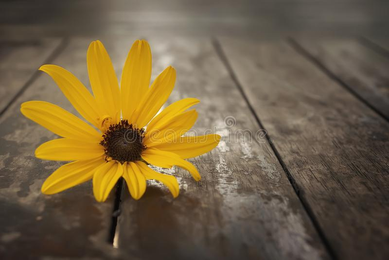 Flor amarilla 2 fotos de archivo