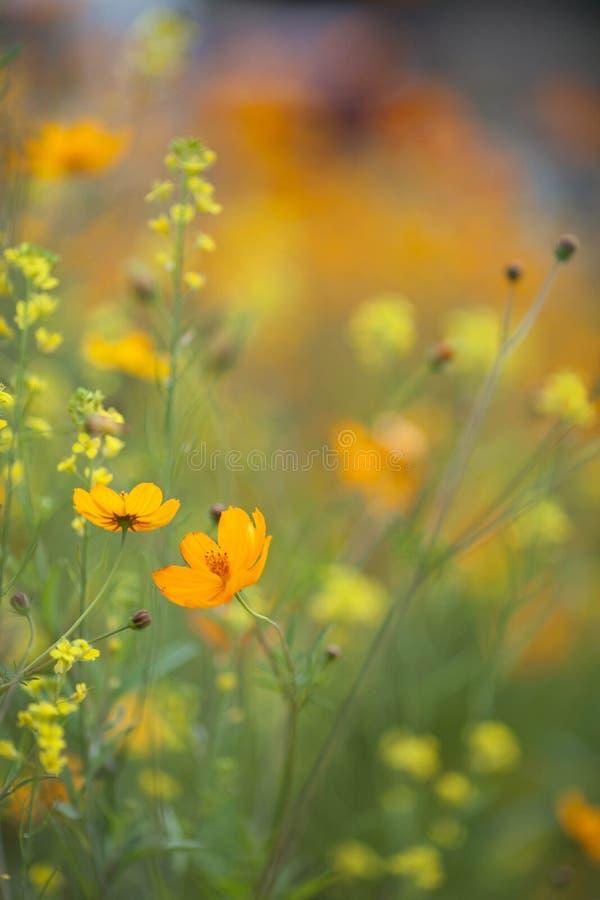 Download Flor amarilla foto de archivo. Imagen de fondo, paisajes - 42430918