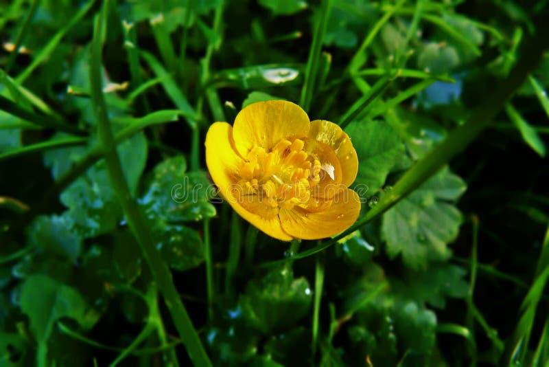 Download Flor amarilla imagen de archivo. Imagen de medio, d0 - 44855593