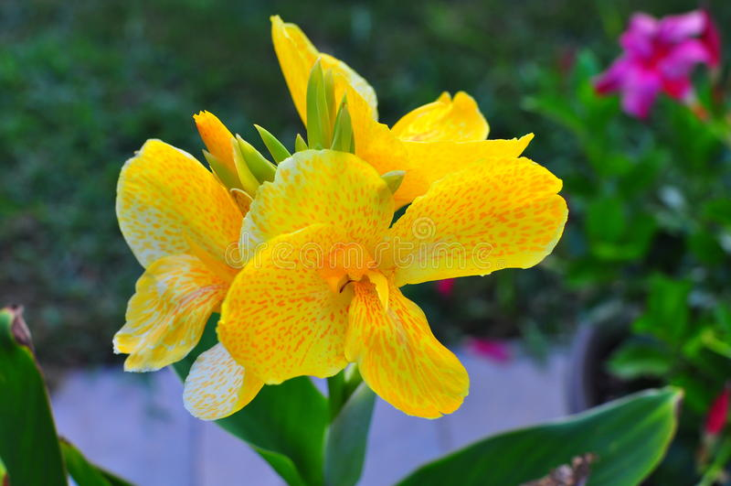 Flor amarilla foto de archivo libre de regalías