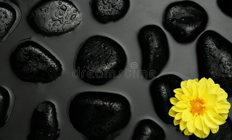 Flor amarilla con los guijarros negros del balneario en agua imagen de archivo libre de regalías