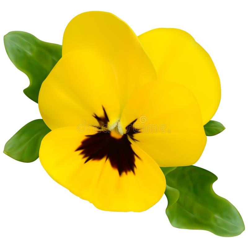 Flor amarilla de la viola ilustración del vector