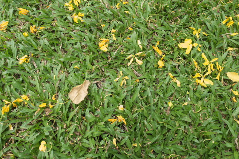 Flor amarilla de oro en hierba fotos de archivo